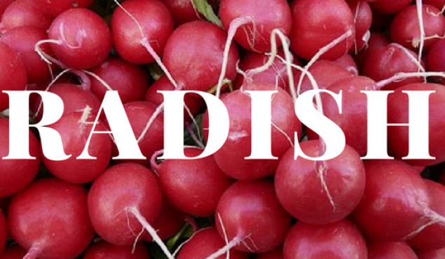 Endless love for Radishes
